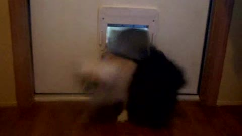 Avalanche Of Dogs Pour In Through The Doggy Door