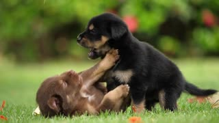 Cute Puppy baby dog playing in the green park!!!!