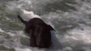 Seehund Biene bei der Morgengymnastik
