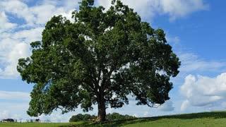 Tree Wisdom and Healing