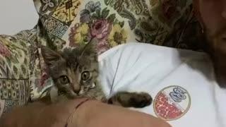 Rumble_funny kitten