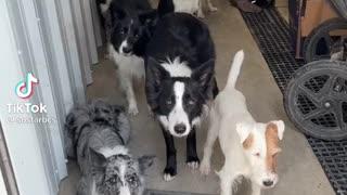 Dogs school