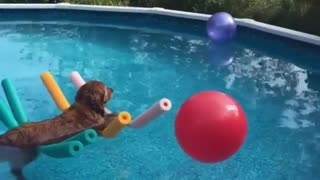 Dog Enjoying a peaceful float in the pool