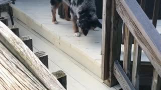 A Very Curious Canine