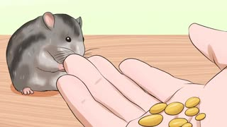 How to Handle a Hamster Without Being Bitten