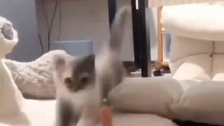 I found a funny kitten