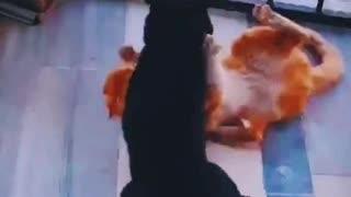 cat fights 2021