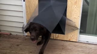 Dogs Take Out Dog Door