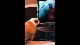 A dog watches TV and interacts with it