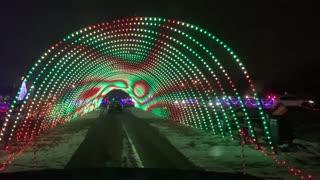 Pomeranians Go to Christmas in Color Light Show