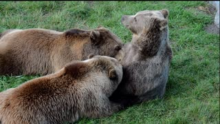 See what the bears are doing