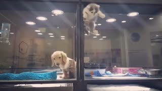 Cute Kitten Playing with a Puppy