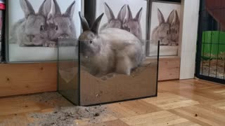 Cute Rabbit Digging