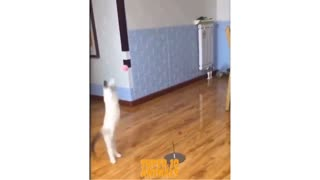 Cute playing cat must watch