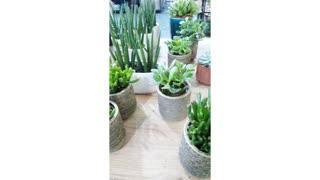 indoor plants succulent