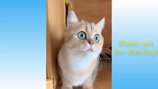 Lindas mascotas y divertidos gatos compilación 😉