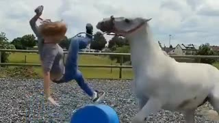 Super horse
