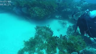 Catching amazing Giant Lobsters Underwater - Big Octopus Hunting Skills in the sea - Catching fish