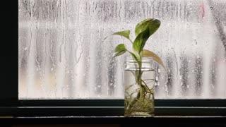 RAINING ON THE WINDOW