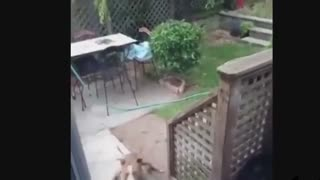 Funny Humans/Dogs Compilation
