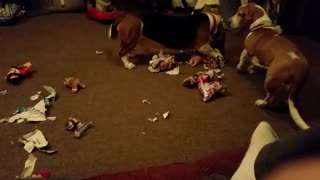 DOGS OPEN CHRISTMAS PRESENTS