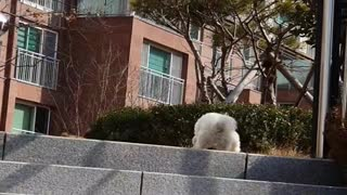 Dogs that climb stairs easily