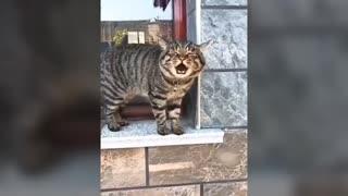 Amazing cats talking English better than human