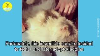 Incredible cat transformation
