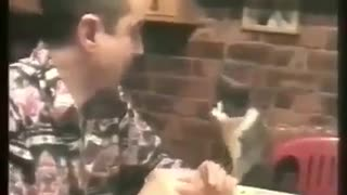 Sharing food with the cat