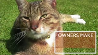 7 Mistakes cat owners make when training a cat