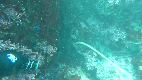 Spearfishing for Rockfish, Perch, and Monkeyface Prickleback Eels.