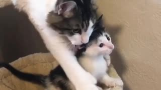 Cat stops her baby from falling