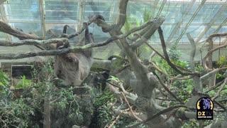 New Member of the Denver Zoo!