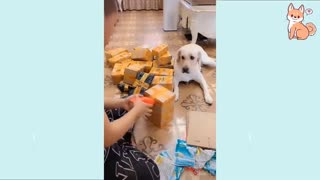 T Dogs Compilation #16 Cute Buddy