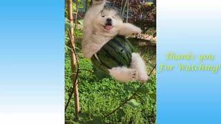 funny animal cat