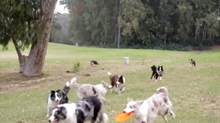 Playing dogs with each other