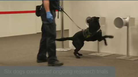 Latest COVID-19 detector dog research and trials underway at Adelaide Airport
