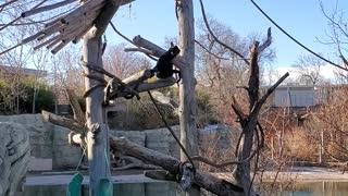 Swinging Monkeys