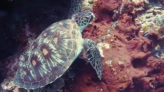 Amazing visuals under water