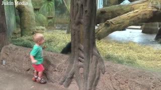 Gorilla plays