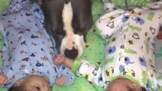 Pit Bull Spends Some Precious Time With These Twin Babies
