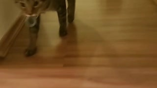 Cat thinks he's a dog!