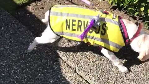 Dog ecstatic to see her old friend after weeks of isolation