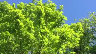 Lively green leaves