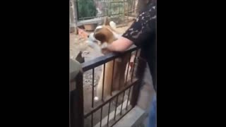DOG BECOMES SCARED AFTER BEING PUT INSIDE A CHICKEN CAGE