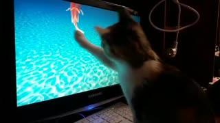 Интересная игра для кошки
