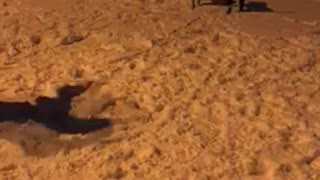 funny dogs in the snow