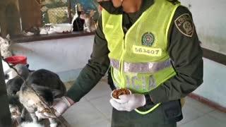 Solicitan ayudas para animales en Bucaramanga