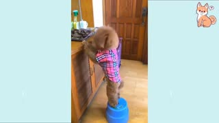 Cute Puppies Cute Funny and Smart Dogs little sweet