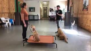 How To Make Dog Become Aggressive Instantly With Few Simple Steps.